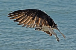 Sanibel Wildlife-006