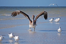 Sanibel Wildlife-008