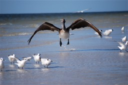 Sanibel Wildlife-009