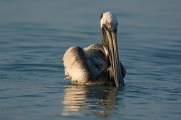 Sanibel Wildlife-011