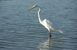 Sanibel Wildlife-015