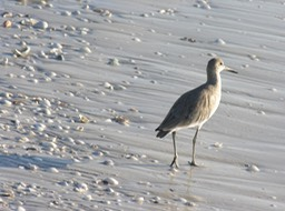Sanibel Wildlife-025