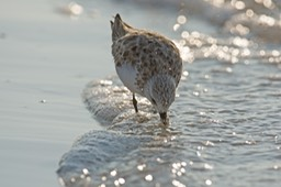 Sanibel Wildlife-031