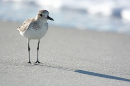 Sanibel Wildlife-033