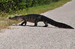 Sanibel Wildlife-046